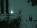 Αντωνία Κουτσούμπα The Cure - The Lovecats