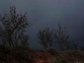 Βασιλική Κεράστα Tom Waits - Day After Tomorrow