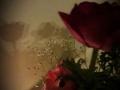 Γιώτα Καραδήμα Kylie Minogue & Nick Cave - Where The Wild Roses Grow