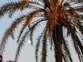 Νινέττα Πλιακοστάμου - Eagles - Hotel California