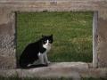 Χαράλαμπος Πασβαντίδης The Cure - The Lovecats