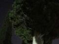 DAY 6 OBSESSION - Νινέττα Πλιακοστάμου