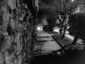Δήμητρα Βόγγλη -Brassai