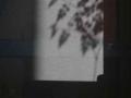 Βασιλική Κεράστα