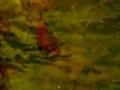 Μίχου Μαίρη - Το χρώμα στον κινημταογράφο (14)